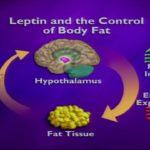 Leptina, la hormona del hambre. Cómo controlar la saciedad y el hambre