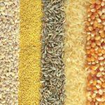 Por qué los granos no son tan saludables como te hacen creer. Antinutrientes y más.